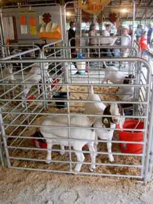 Triple Creek Trail • Livestock Equipment Catalog